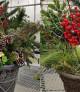 Christmas Porch Pot Workshop